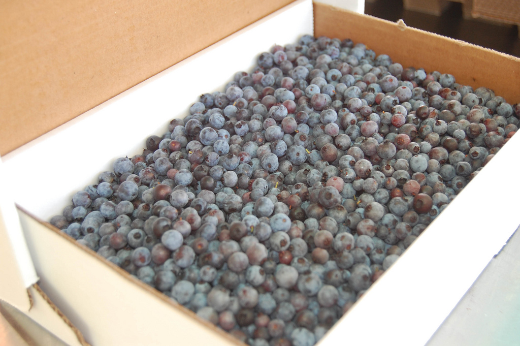 Blueberries from Moon HIll Farm in Whiting, Maine.